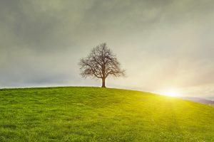 Le domaine de l'environnement: pourquoi s'y intéresser?